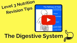 The Digestive System - Level 3 Nutrition Revision Tips