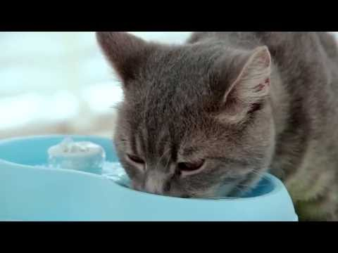 Cat H2O - Fresh & filter water for healthier cats