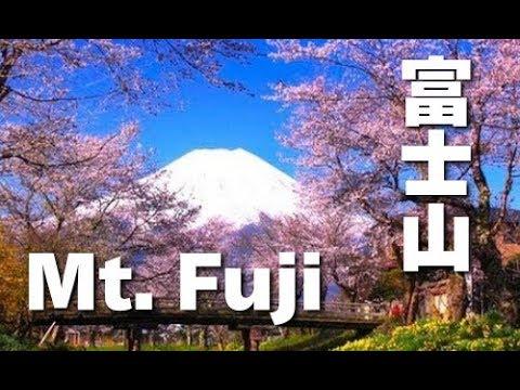 富士山 Mt. Fuji in UNESCO World Heritage 世界遺産登録の春の富士山と桜(sakura)、忍野村と西湖いやしの里根場 日本の桜 花の名所案内