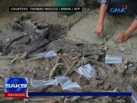Saksi: Natuklasang buto ng rhinoceros, patunay na may sinaunang tao na sa Pilipinas