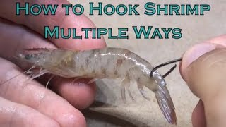 Tarpon World - How to Hook Shrimp Multiple Ways