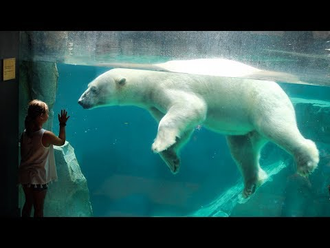 Zoo Tours Ep. 31: Great Bear Wilderness    Brookfield Zoo