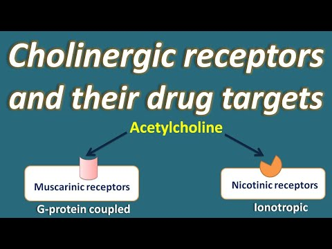 Cholinergic Receptors And Their Drug Targets