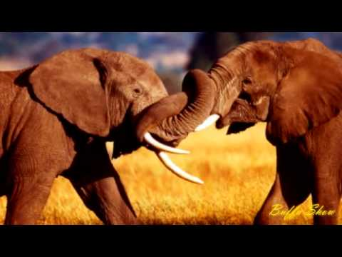 Henry Mancini - African Symphony