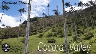 Cocora Valley drone footage (tallest palm trees in the world) - Trek with Tech