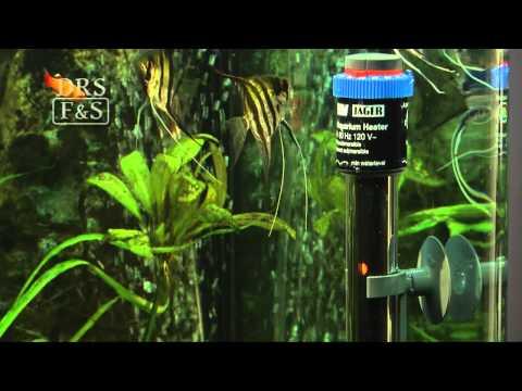 Best Rated Aquarium Heaters In 2020