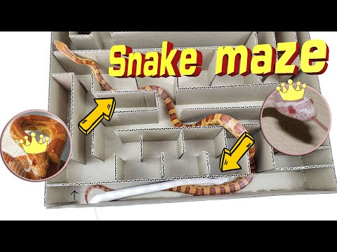 Interesting Maze Labyrinth For Small Snake. Can They EXIT?