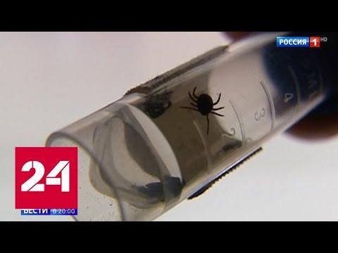 Невыспавшиеся, голодные и злые: клещи вышли на охоту с начала весны - Россия 24