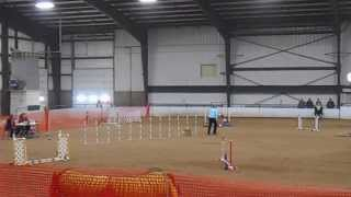 """Dally--dayton Dog Training Club Masters Std 4"""" Pref 10/26/13"""