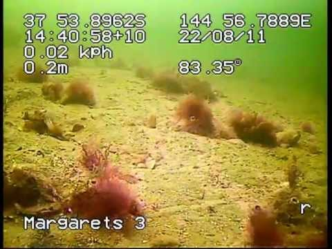 Towed video surveys of Spuds and Margarets reef sites - Port Phillip Bay