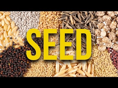 SEED. Where to buy and saving.