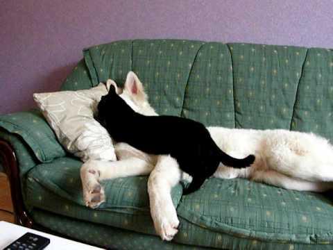 Chien chat qui joue ensemble c 39 est trop mignon youtube - Photo de chien et chat mignon ...