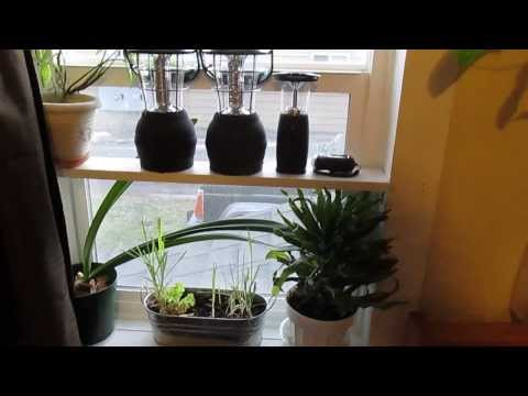 Garden Window in Prosper