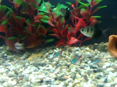 Pesci tropicali in acquario con acqua dolce youtube for Pesci acqua dolce commestibili