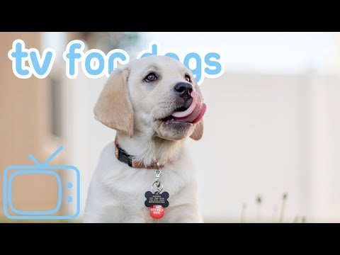 8 HOURS Of DOG TV! Fun And Entertaining TV For Dogs! NEW 2019!