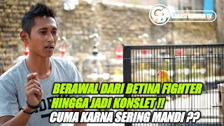 Download lagu LOVEBIRD SEKARWANGI DARI FIGHTER HINGGA BISA KONSLET KARNA SERING MANDI