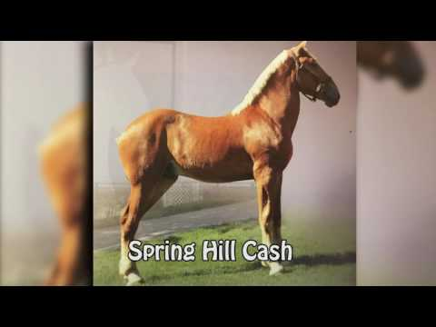 Spring Hill Farms