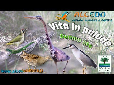 Vita in palude - Airone rosso, Nitticora, Voltolino, Picchio verde e Ramarro