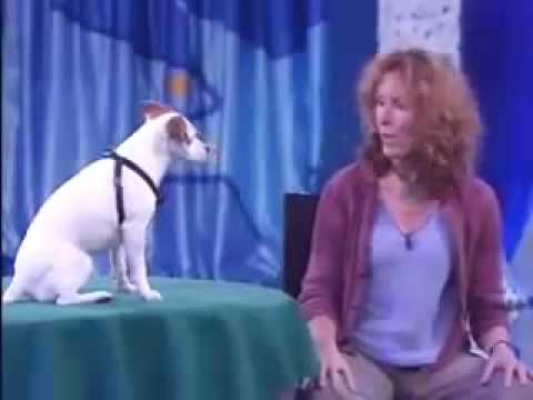 The Best Dog Trainer on the World with the Smartest Dog on the World! – Video.flv