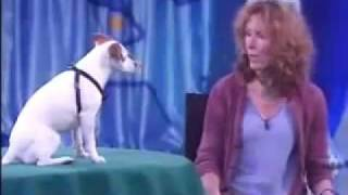 The Best Dog Trainer On The World With The Smartest Dog On The World! - Video.flv