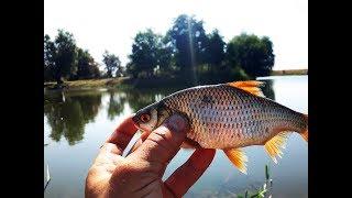 Рыбалка на удочку и фидер  на карася ,окуня и плотву Рыбалка на видео 2017