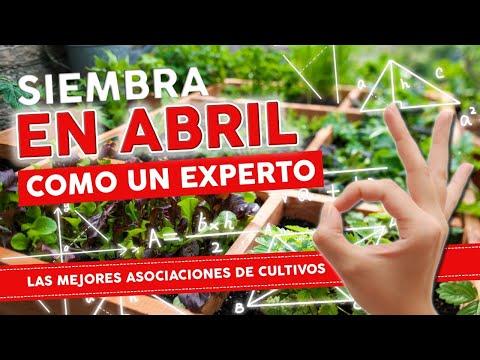 Que SEMBRAR en ABRIL  y las ASOCIACIONES DE CULTIVOS para tu huerta urbana - ESPECIAL 2021