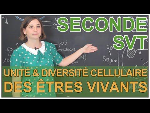 Unité et diversité cellulaire des êtres vivants - SVT Seconde - Les Bons Profs