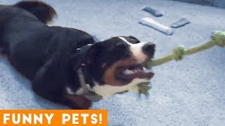 Download Funniest Pets & Animals of the Week Compilation May 2018 | Hilarious Try Not to Laugh Animals Fail Mp3 and Videos