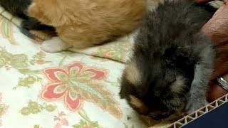 New Kitten Joins!