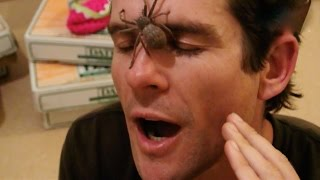 Boyfriend saves me from GIANT spider attack! :-O