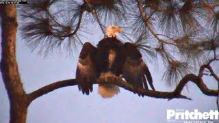 SWFL Eagles ~ Our FIRST LOOK AT M15's BROOD PATCH 💕 Bath & Amazing Closeups 12.9.19