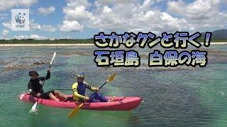 2017年7月21日、WWF親善大使のさかなクンが、石垣島白保の海でサンゴの...