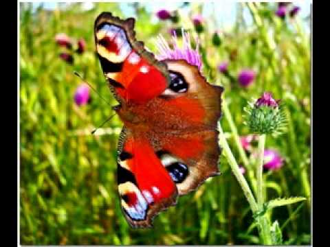 Most beautiful butterflies in the world - YouTube