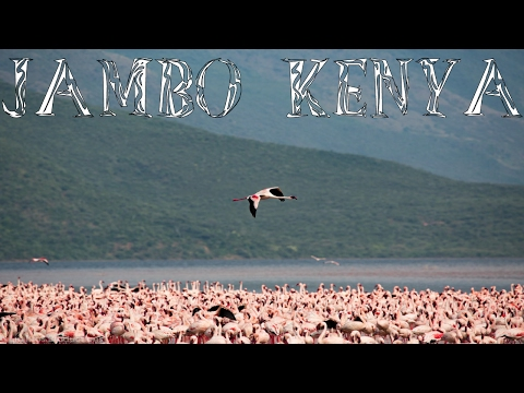Jambo Kenya - African Safari Travel Video