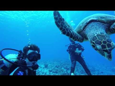 Diving Compilation from French Polynesia
