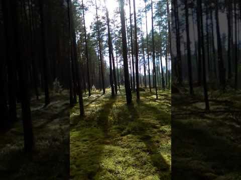 Kaip ignalinoj žaliųjų ir valstiečių valdomame rajone kertami miškai kvadratineis km