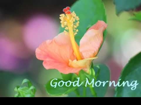 Beautiful Flowers Images Good Morning Wishes Morning Greetings