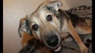 Как принять роды у собаки и ухаживать за щенками дворняжки