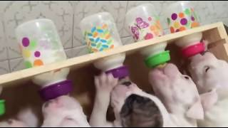 Я ЧАС СМЕЯЛАСЬ Смешные зверята Приколы с собачками - Забавное видео 2019 МатроскинТВ