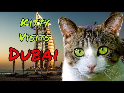 Kitty Visits Dubai United Arab Emirates