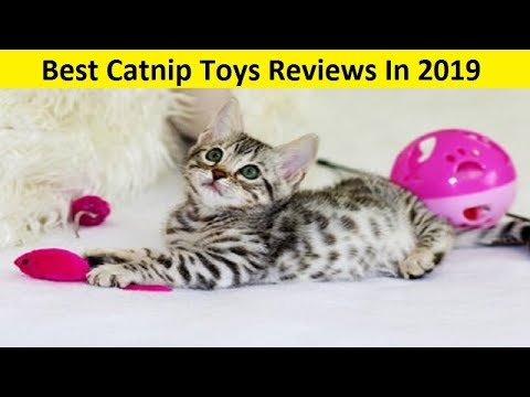 Best Cat Toys 2020.Top 3 Best Catnip Toys Reviews In 2020 Youtube
