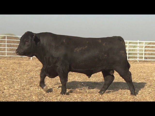 Express Ranches Lot 284