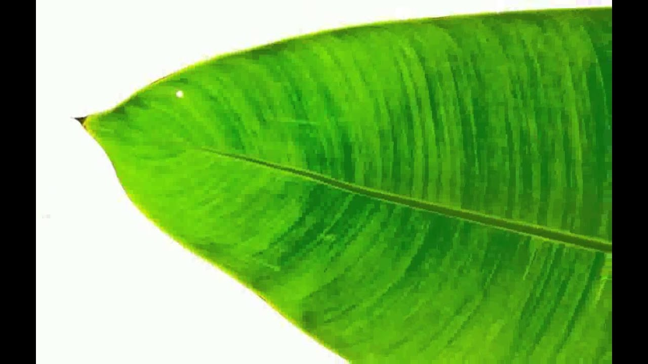 banana leaf Home,page-template-default,page,page-id-19843,ajax_fade,page_not_loaded,,wpb-js-composer js-comp-ver-511,vc_responsive.