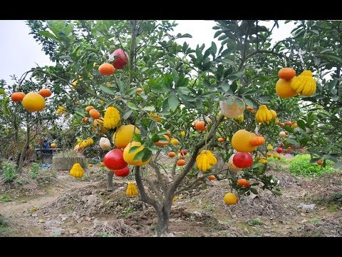 WOW! Most Amazing Fruits & Vegetables Farming Technique - Ag