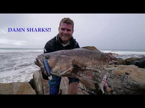 Tackling Up For Mulloway | Fisho App