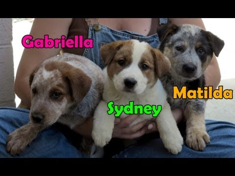 Dog rescue in central California (Gaia, Sydney, Matilda & Gabriella) - Please share.