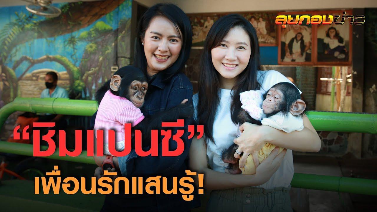 """รักเหมือนลูก """"ลิงชิมแปนซี"""" เพื่อนรัก! I ลุยกองข่าว2020#251"""