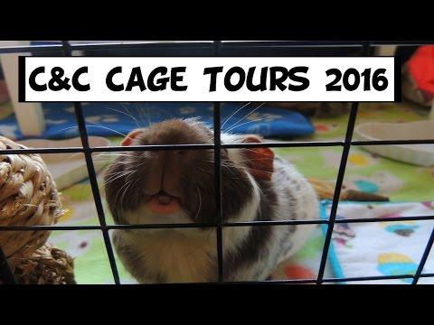 Guinea Pig Cage Tours 2016