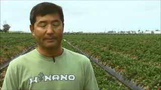 Henry Ito on Growing Strawberries with Hortau Irrigation Management