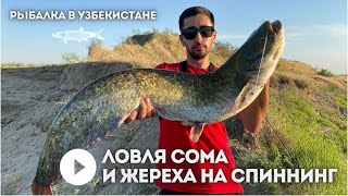 Ловля Сома и Жереха на спиннинг Рыбалка в Узбекистане